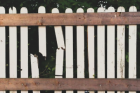 Our Tampa Fence Repair services are the best in the area. Sometimes you don't need to completely tear down your old fence and get a new one. It may be a better option to repair your broken and damaged parts and make them like new again!