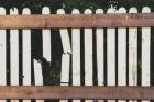 fence repair tampa